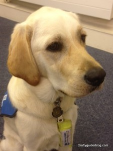 Harry Guide Dog 2
